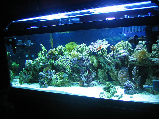 Aquarium Saltwater Information