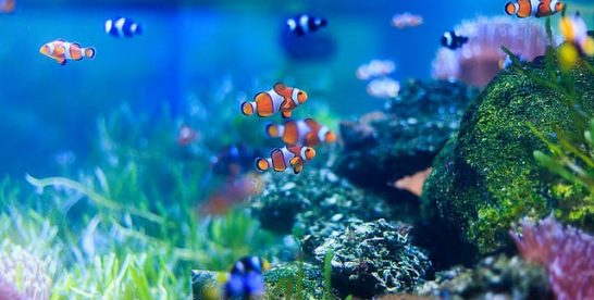 Aquarium Water Basics You Should Know