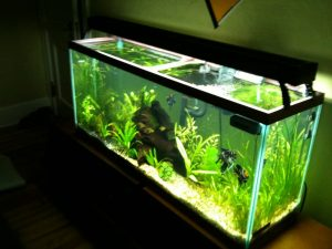 55-Gallon Fish Tanks