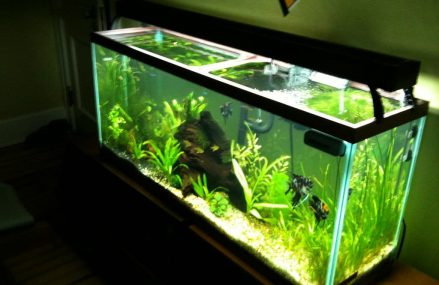 Best Filters For 55-Gallon Fish Tanks