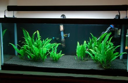 Best filters for 20-Gallon Fish Tanks