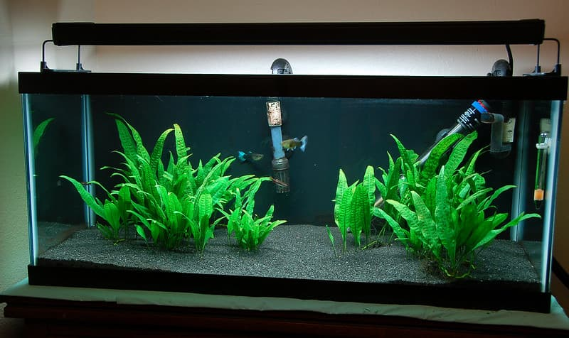 FILTERS FOR 20-GALLON FISH TANKS